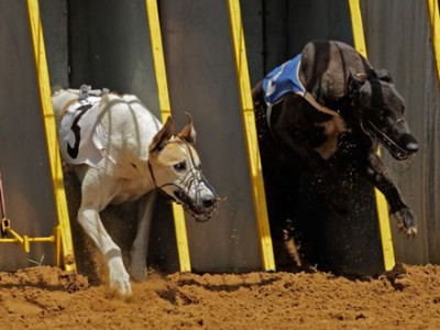 Take Heart Southend - Romford Dogs